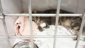 услуги стационара в ветеринарной клинике